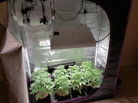 Are you thinking about growing your own.