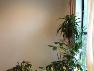 Benefits of having houseplants