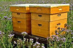 beehive-3703434_1920.jpg