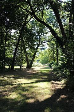 Parc château de Ternay