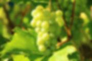 Vignobles de Saumur - Château de Ternay