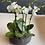 Thumbnail: 5 Mini orchids Arrangement