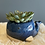Thumbnail: Succulent in a blue whale