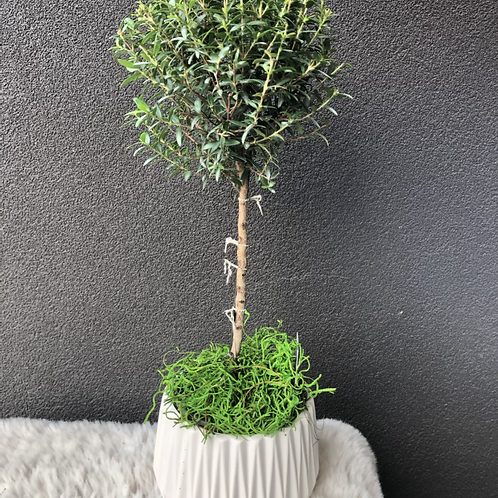 Topiary in a pot