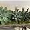 Thumbnail: succulents garden