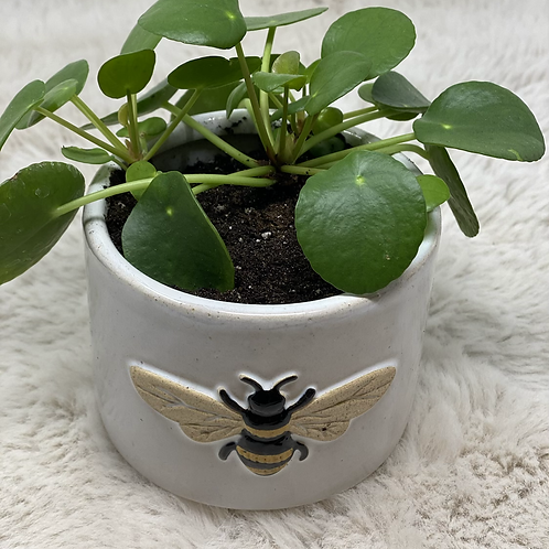Pilea in a bee pot