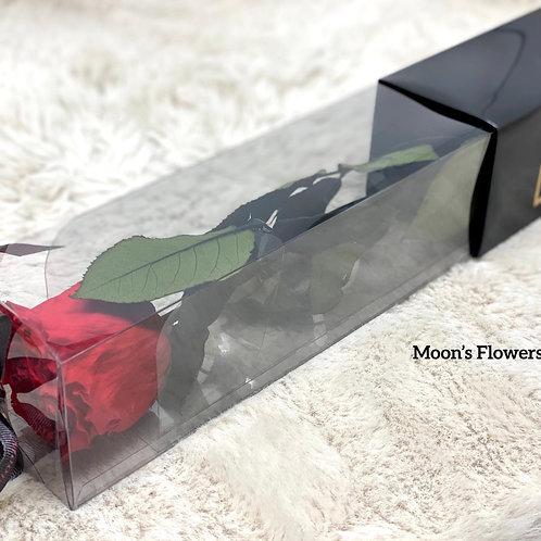 Preserved Rose