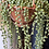 Thumbnail: String of pearls