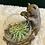 Thumbnail: Air plant in a bear pot