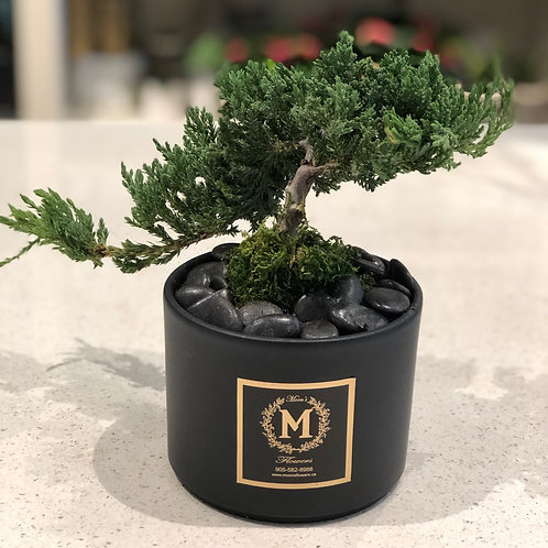Bonsai  - Small