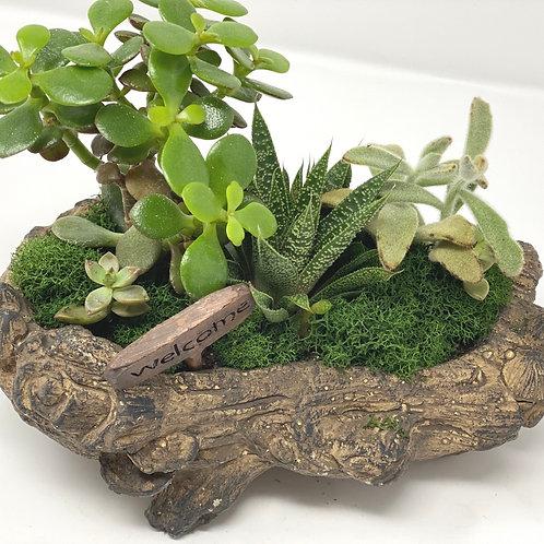 Succulent Garden #02