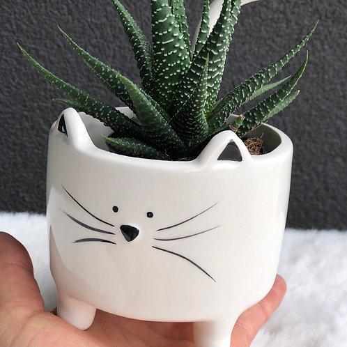 Succulent with Cat