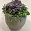 Thumbnail: Succulent Garden #5