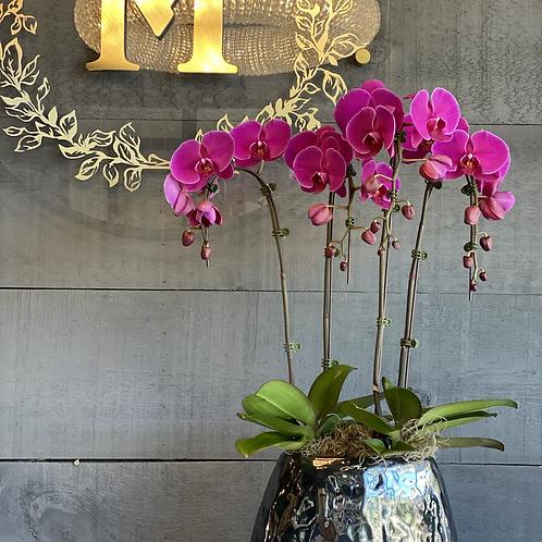 Purple orchids in a pot