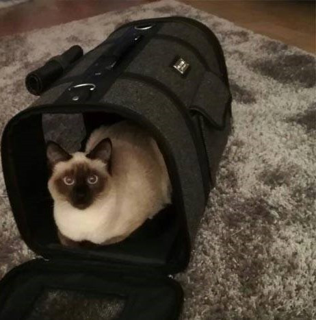 kissa kuljetuslaatikko