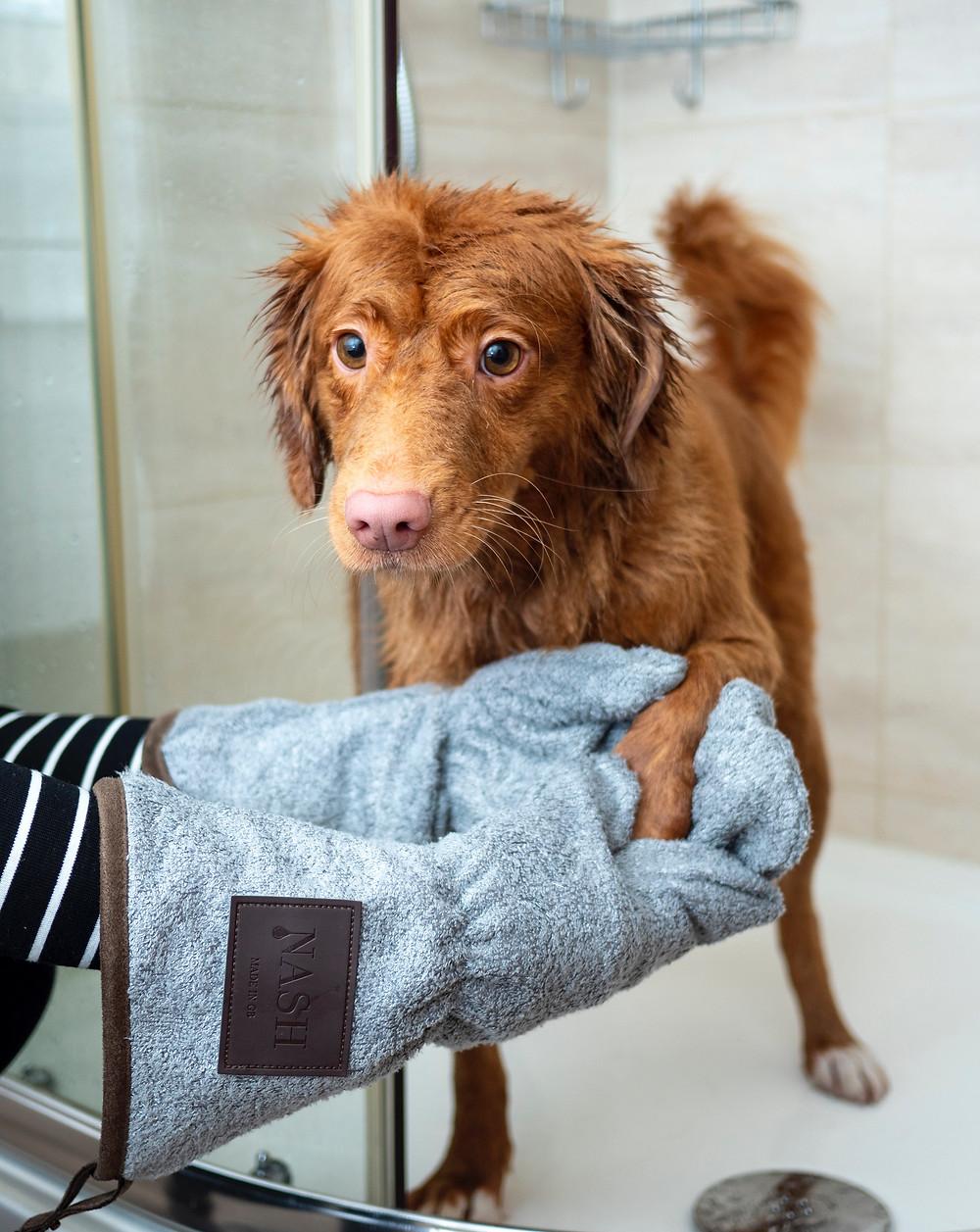 koira pesu kylpyhuone