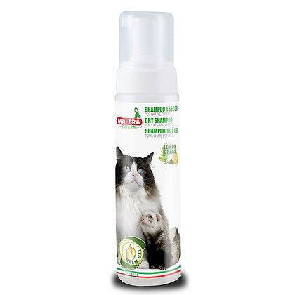 Kuivashampoo kissoille