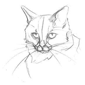 feline_head_1.jpg