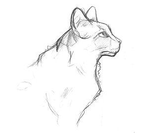 feline_head_3.jpg