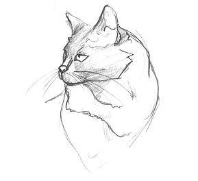 feline_head_2.jpg