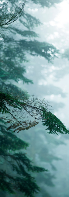 Nordisk granskov i tåge