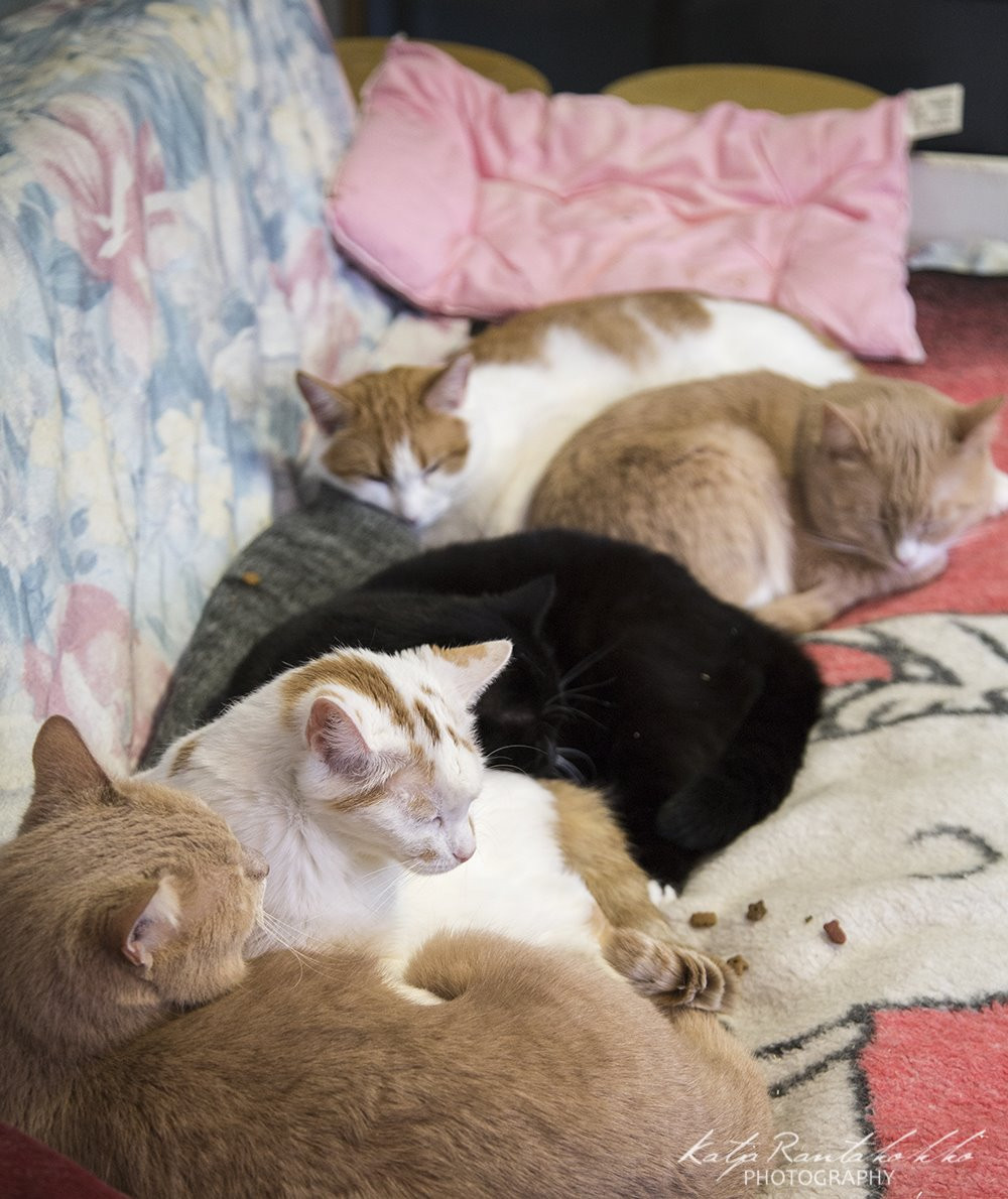 Tyypit sovussa sohvalla