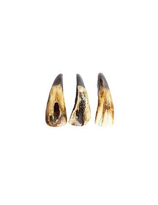 Buffalo Teeth