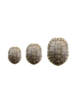 Red Ear Slider Turtle Shells