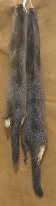 Mink (Wild)
