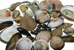 Shellfish Oil