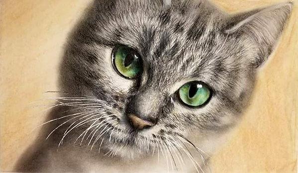 nuria-cat_edited.jpg