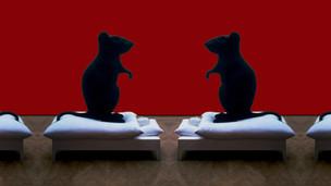 Une souris grise / Tu devras bien un jour raconter la vérité à quelqu'un