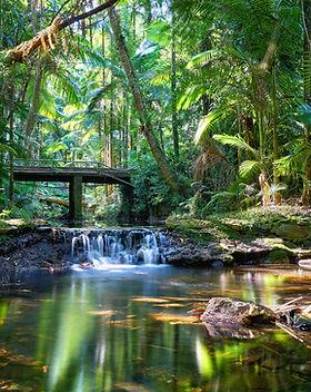 Rainforest small.jpg