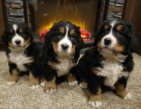 Puppies1.jpg