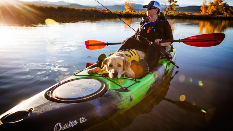 pooch kayaking.jpg