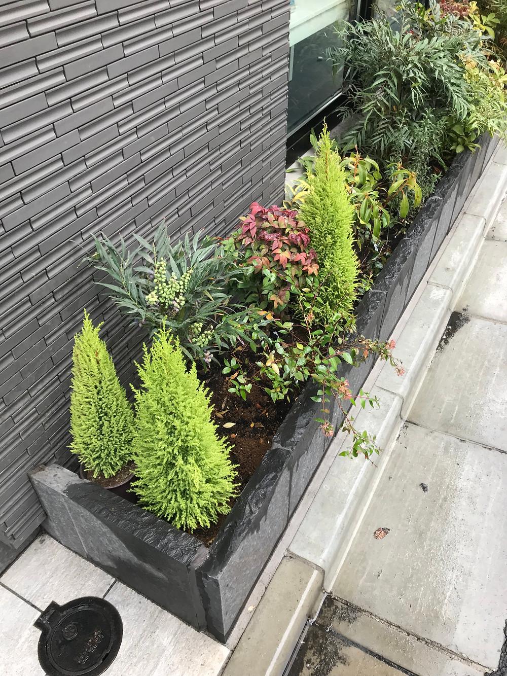 綺麗な植物