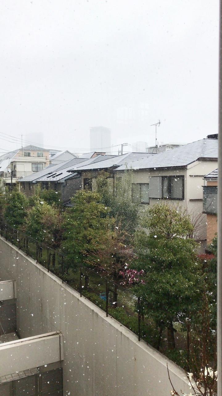 雪の日の写真