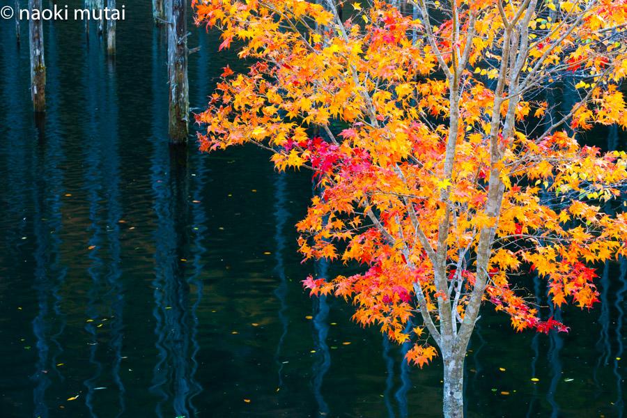紅葉 自然湖