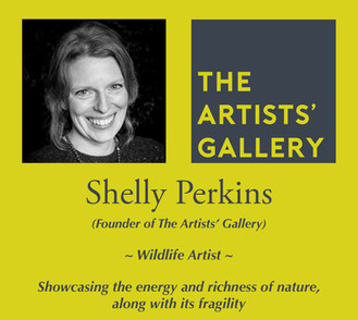 Shelly Perkins