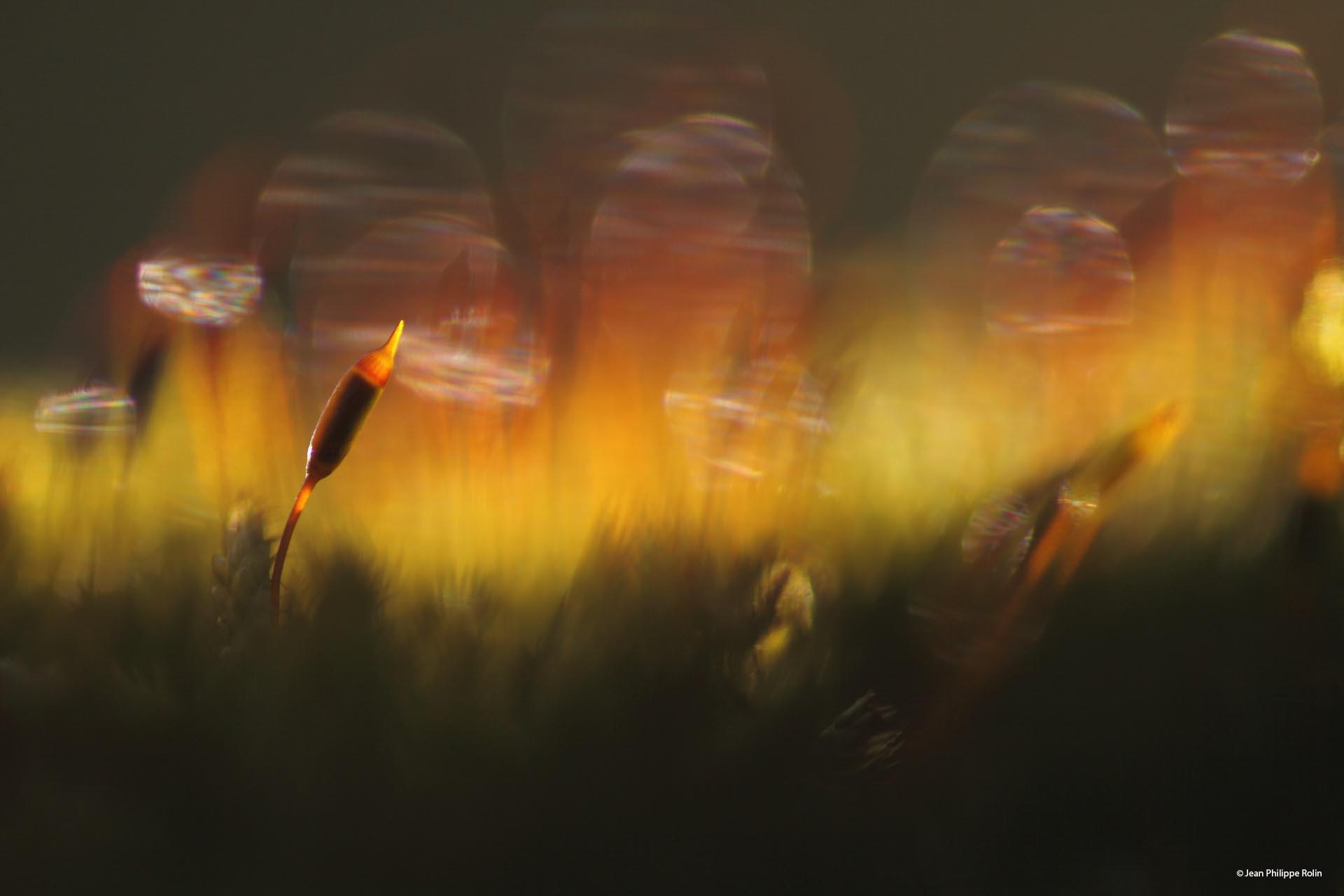 © Jean Philippe Rolin