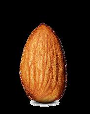 kisspng-almond-clip-art-almond-png-photo