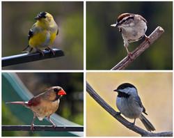 fourbirds