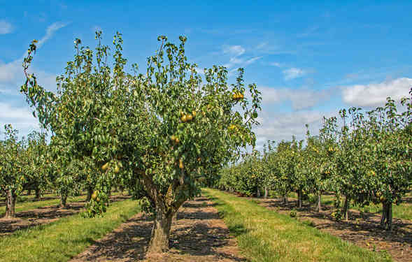 Orchard_07 by Richard Peters.jpg
