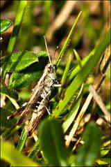 grasshopper must print.jpg