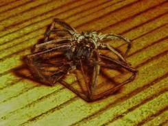 Spiders 9.jpg