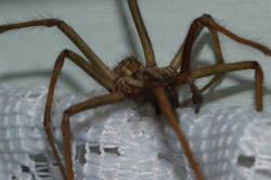 Spiders 5.jpg