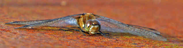 DRAGONFLY  A DIFFERENT VIEW by Reg Holme
