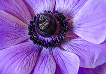 THE COLOUR PURPLE by Jenny Monk.jpg