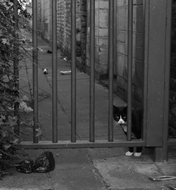 ALLEY CAT by Richard Peters