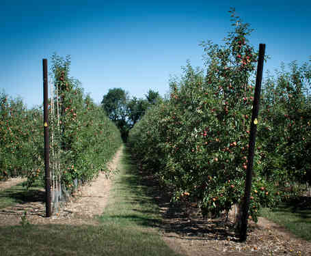 Orchard_08 by The Whorlows.jpg